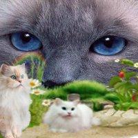Кошки :: Сергей