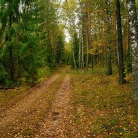 Где то в лесах Белоруссии :: Игорь Сикорский