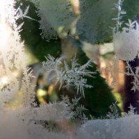 Узоры Мороза :: Наталья (D.Nat@lia)
