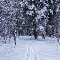 Зимний пейзаж :: Талик К