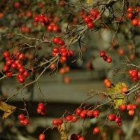 октябрьские плоды :: Михаил Жуковский