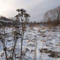 Скоро зима :: Андрей Михайлин