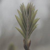Весенний туман :: Виктория Браун