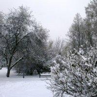 Зима пришла 1 :: aksakal88