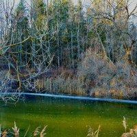 Замерзло изумрудное озерцо :: Милешкин Владимир Алексеевич