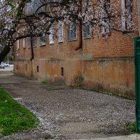 Весна на улицах моего города :: Игорь Сикорский