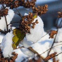 В зимнем лесу :: marmorozov Морозова