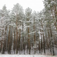 Первый снег :: Денис Samuila