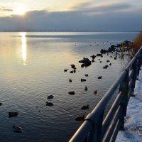 Утки на набережной :: Дмитрий