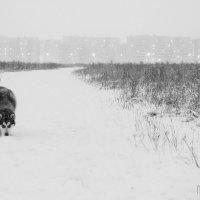 На прогулке в первый снег... :: николай постернак