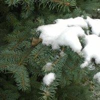 Первый снег :: Мила