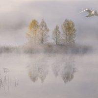 В туманном плену у реки.... :: Tatiana Markova