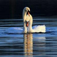 Любви прекрасные порывы. :: Alexander Andronik