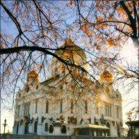 Храм Христа Спасителя. Москва.(29.11.2015г.) :: Виталий Виницкий
