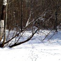 вот и зима. :: petyxov петухов