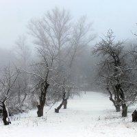 """... старый сад....(из альбома """"the country of fog""""...) :: Александр Герасенков"""