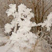 """...ноябрьские """"цветы""""...(из альбома  """"the country of fog""""...) :: Александр Герасенков"""