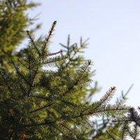 Forest :: Мари Шмакова