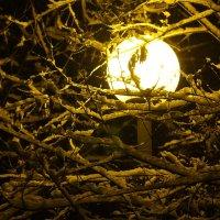 луна :: Владимир Зырянов