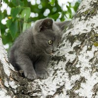 Котёнок Филя :: Alex Bush