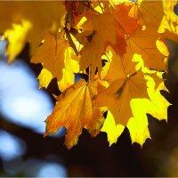 Осенняя палитра :: Виталий