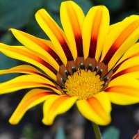 Цветик - самоцветик :: Виктор Шандыбин