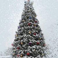 Завтра первый день зимы... :: Тамара (st.tamara)