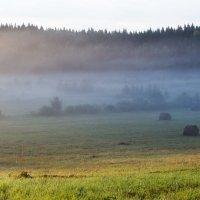 Утренний туман :: Оксана Пучкова