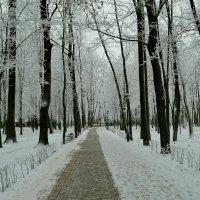 Первый снег :: Милешкин Владимир Алексеевич