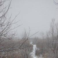 снежная тропа :: Ann