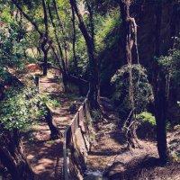 Kakopetria Forest :: Yan Berezkin