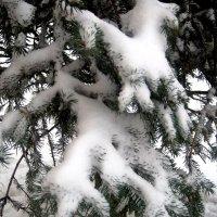 С первым днем зимы! :: Елена Семигина