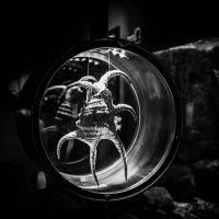 Aquarium :: Владимир Pechkin