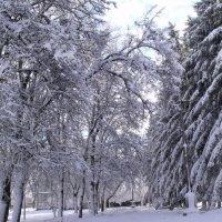 Зима 2015 :: Анатолий Бугаев
