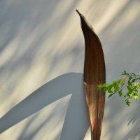 Листочек пальмы :: Николай Танаев
