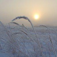 Туманным зимним днем :: Павлова Татьяна Павлова