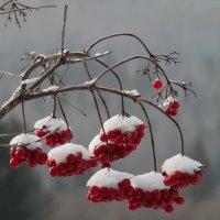 Первый день зимы :: Валерий Чепкасов