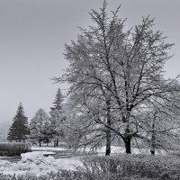Туманный день :: Виктор Четошников