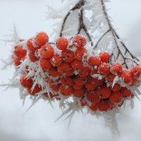 С первым днем зимы! :: Ната Волга