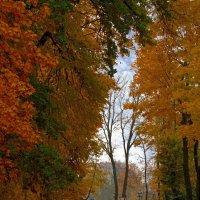 Осенняя улочка :: Сергей Карачин