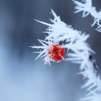 С первым днём зимы. :: ЛЮБОВЬ ВОЛГИНА