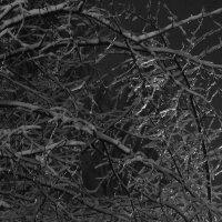 """Последний день осени. """"Ледяные деревья"""" :: Евгений Евдокимов"""