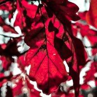 Осенний настрой :: Андрей Машков
