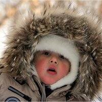 Сибирячок. :: Владимир Сидоркин