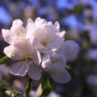 Весны красивый привет :: Татьяна Ломтева
