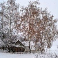 Береза зимняя :: Alexey Litvin