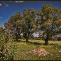 Когда деревья были большими :: Андрей