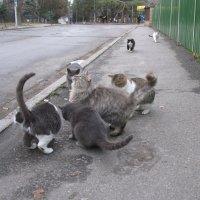 Уличные наблюдения: И коты имеет право на сходки. Кото-пробег хотят признать демонстрацией. :: Алекс Аро Аро