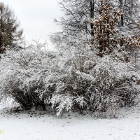 First frosty day :: Sergey Sergaj
