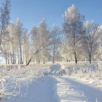 Зима,однако! :: Николай Мальцев